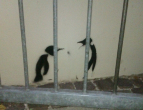 Oh no, penguins in jail in Schwabing